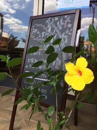 夏の花ハイビスカス
