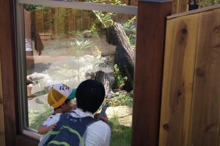 埼玉県こども自然動物公園 カワウソ