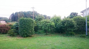 庭木 剪定