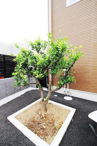 植栽 みかんの木 蜜柑