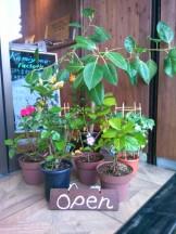 お店 植物